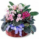 online mothers day plants to japan
