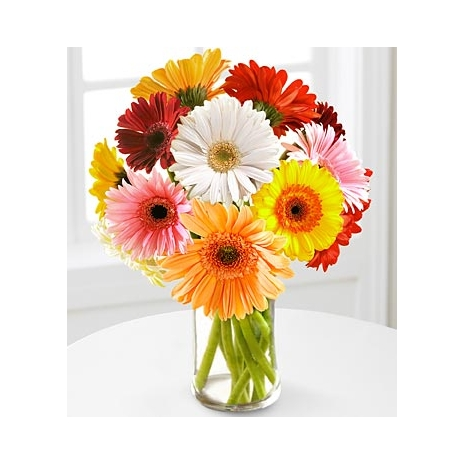 send 12 multi color gerbera daisies in vase to japan