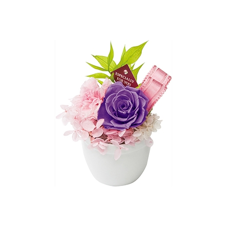 candy purple rose to japan