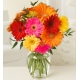send 10 stems of assorted mix of daisies to japan