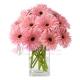 send 12 pink gerbera to japan